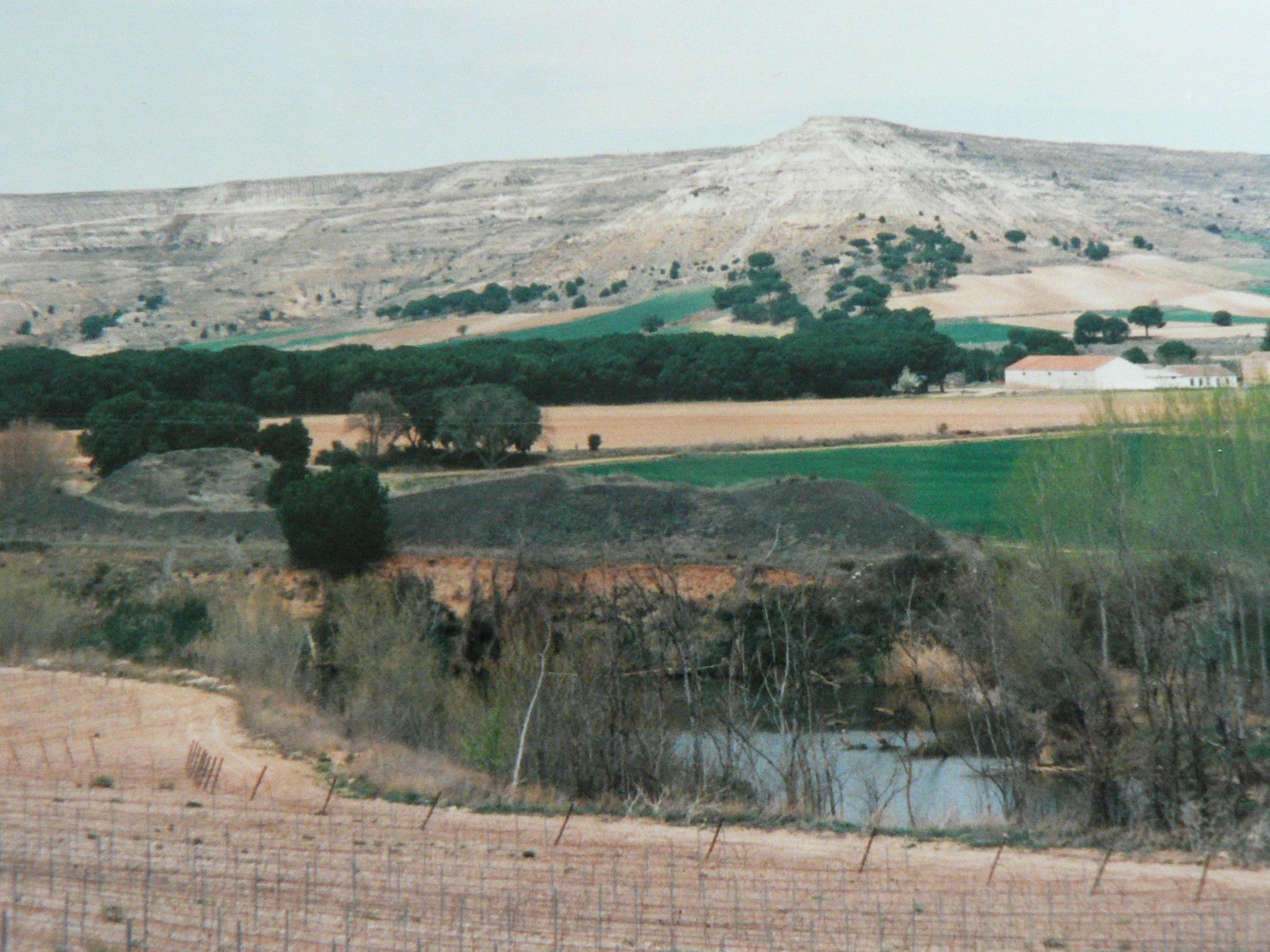 Weinberge am Duero